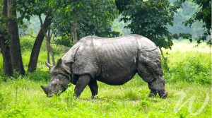 Kate Middleton and Prince William visit One-Horned Rhino
