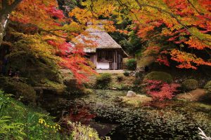 seasonal japan autumn