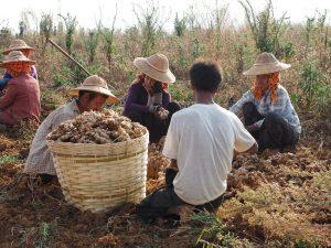 Locals Working, In focus Myanmar