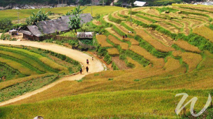 Sapa Rice Terraces, strolling through sapa