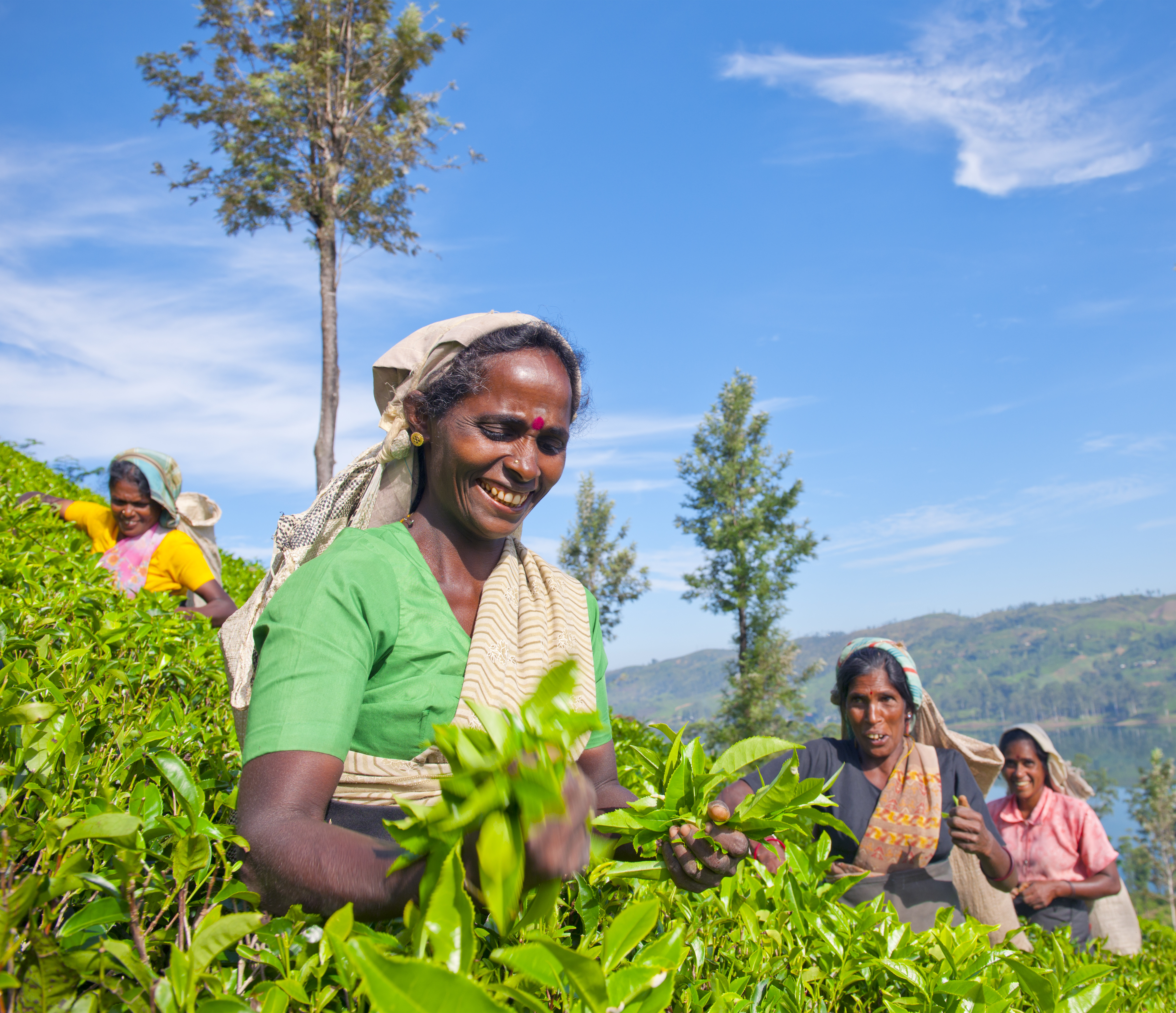 Women Tea Pickers in Sri Lanka, focus on sri lanka