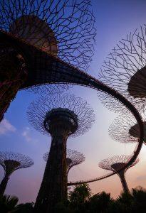 Super Tree at Twilight, Gardens by the Bay, Singapore, Hong Kong vs Singapore
