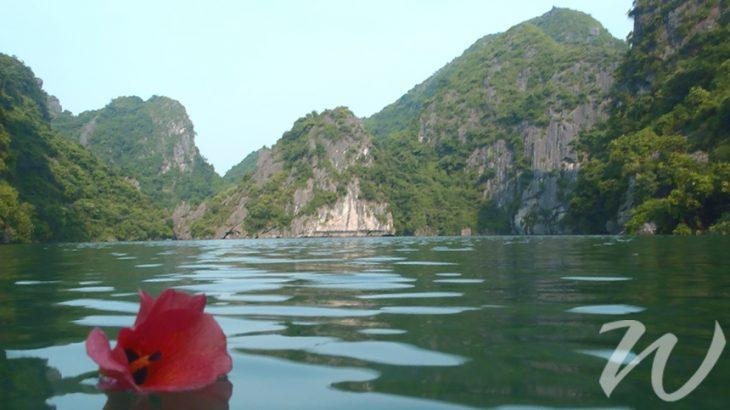 Flower on Halong Bay Vietnam