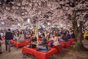 The tradition of Hanami, Kyoto, cherry blossom