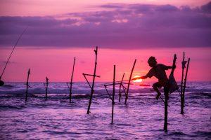 Stilt Fisherman, Sri Lanka, staff hotlist