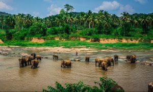 Sri Lanka Elephant Sanctuary, discover sri lanka