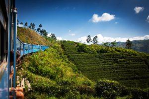 Tea plantation view from train, discover sri lanka