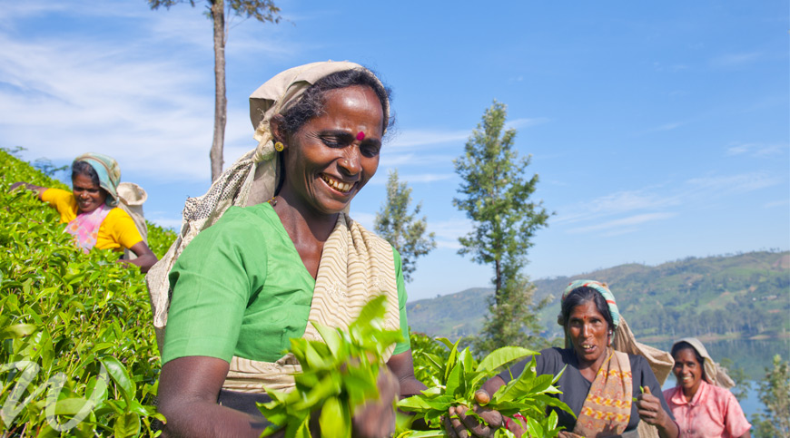 Tea Pickers, Sri Lanka,discover Sri Lanka