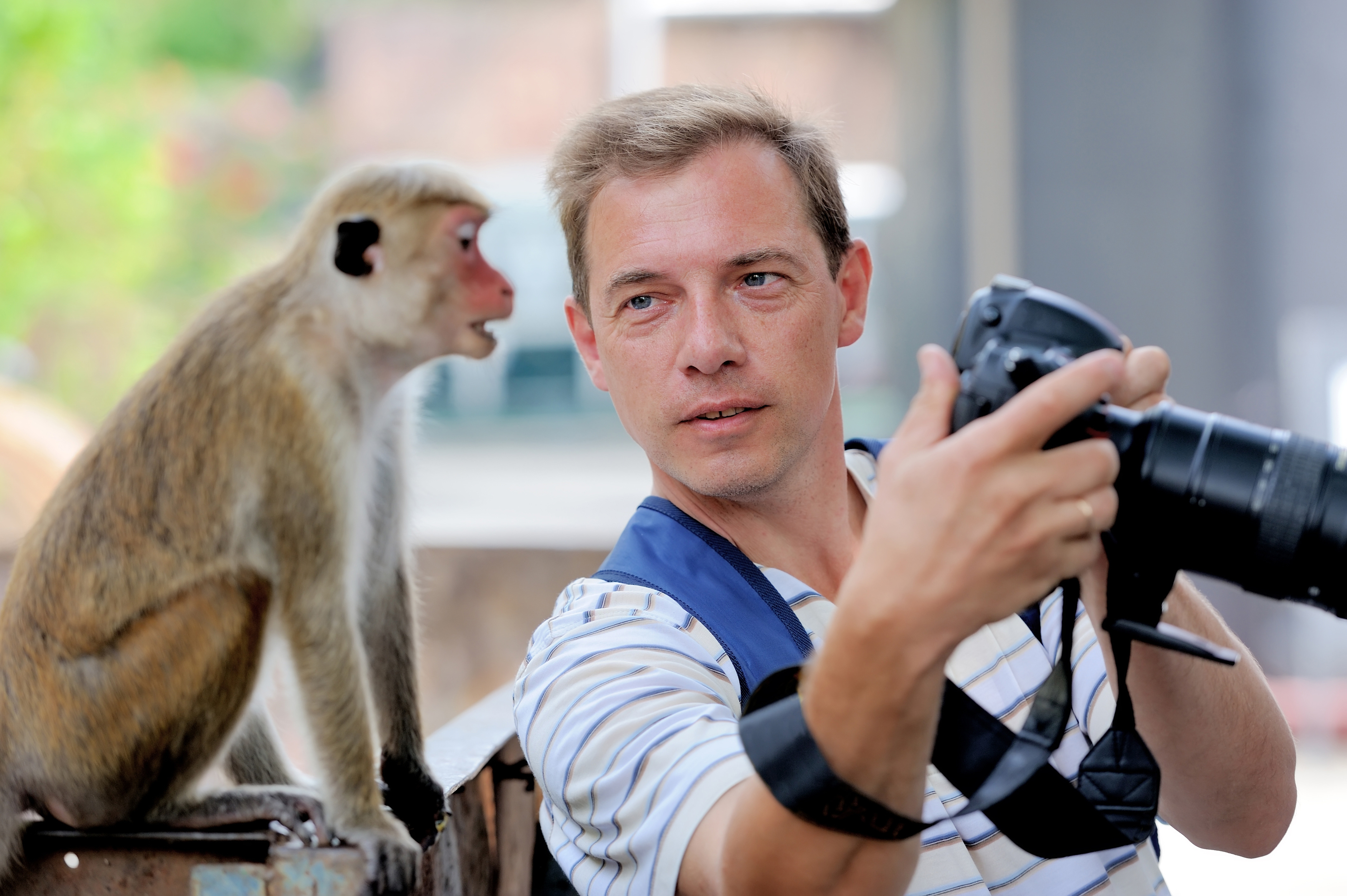 Photographer shows a monkey their picture! travel photography
