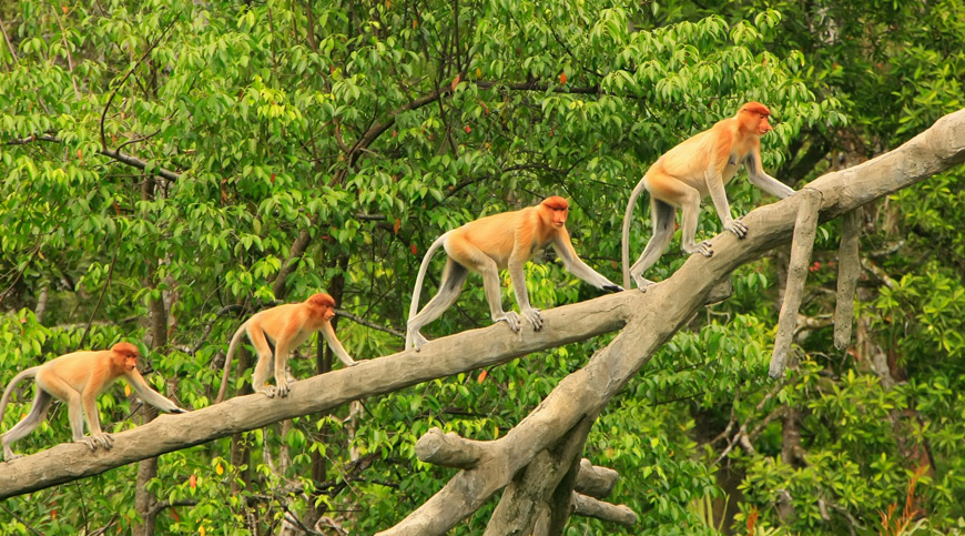 Borneo, wellness tourism