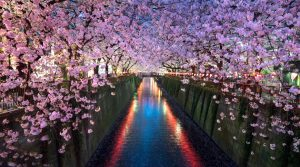 Cherry blossoms, Japan, travel wish list