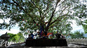 Sacred Bo Tree, Anuradhapura, tour Sri Lanka