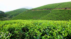 Biodiverse Sinharaja, tour Sri Lanka