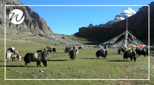 Asia Travel Recommendations, Take in the views of Mt Kailash, Tibet