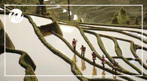 Walk among Rice Terraces