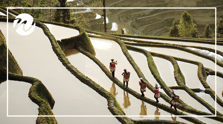Walk among Rice Terraces