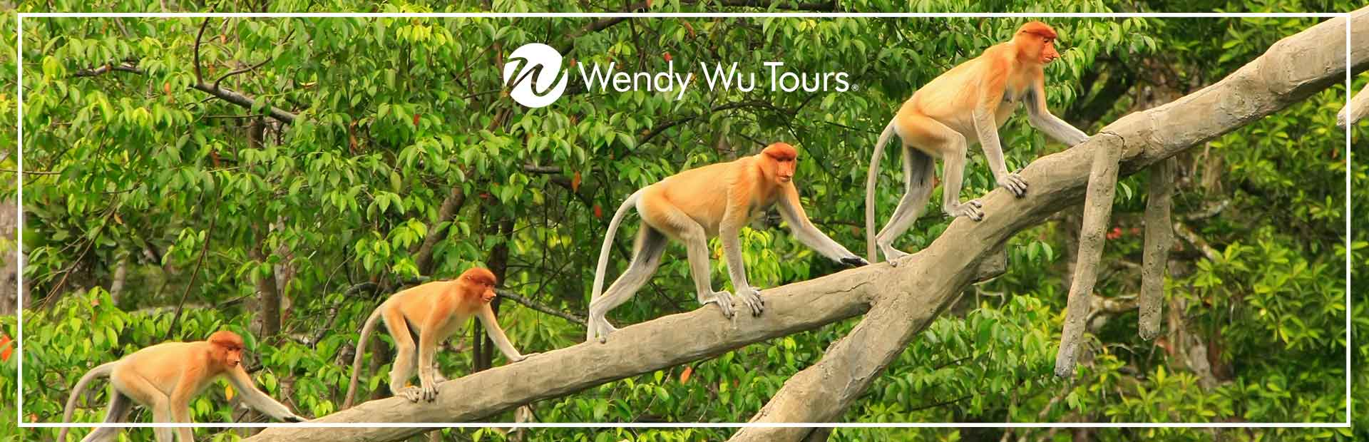 Proboscis Monkeys, tailor-made tour