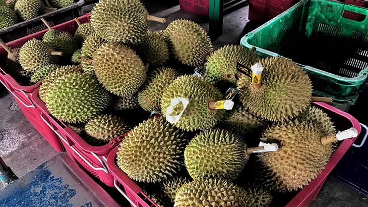 Selection of Durian ready to sell