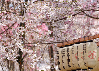 See Japan's Cherry Blossoms