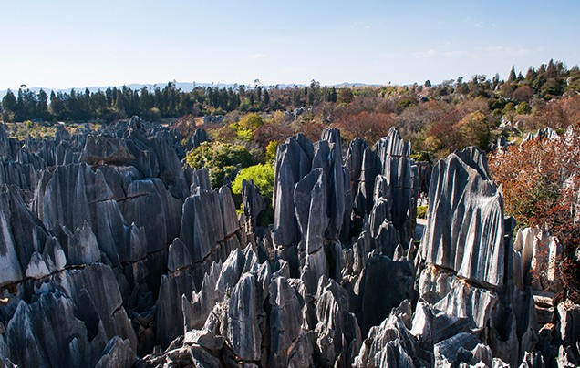 Day 21: Stone Forest