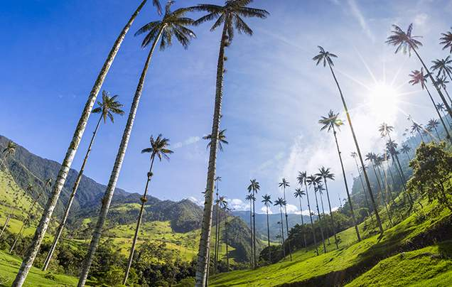 Day 13: Cocora Valley