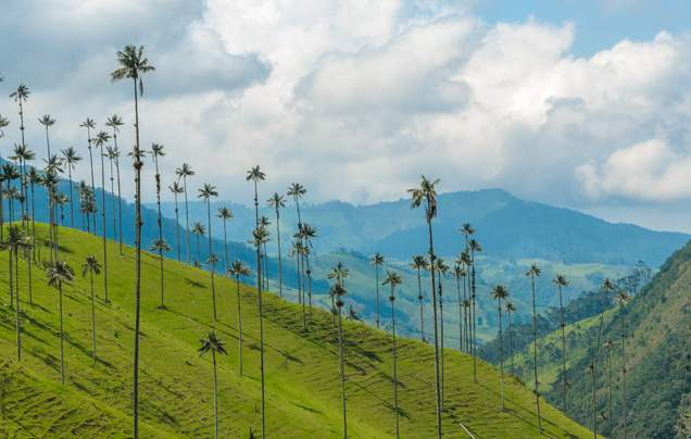 DAY 6: COCORA VALLEY