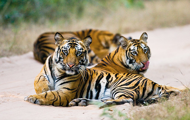 Day 5: Tigers of Ranthambore