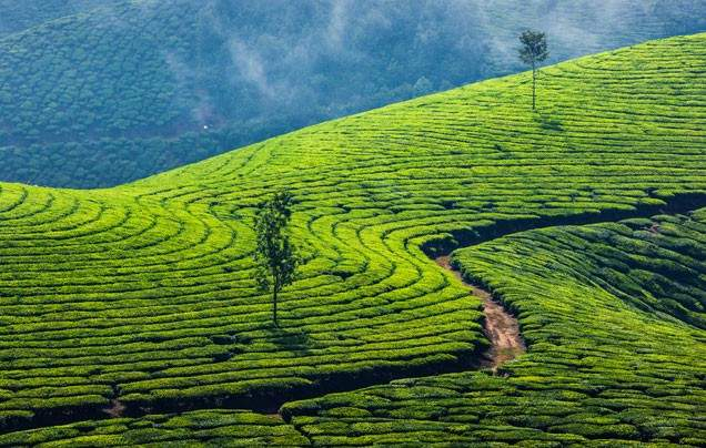 Day 7: Tea Plantations
