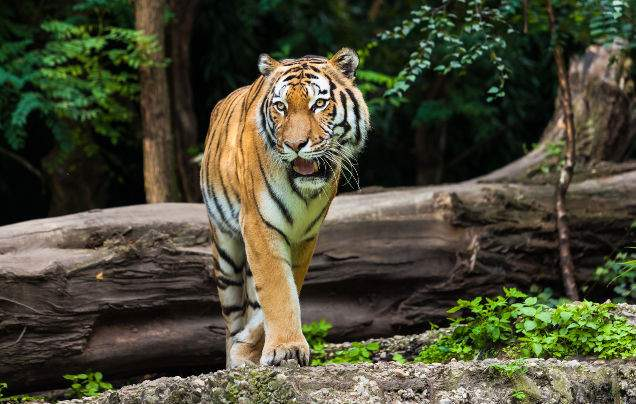 Day 6: Tigers of Ranthambore