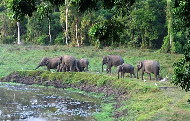 Day 12: Jeep safari at Gorumara Wildlife Sanctuary
