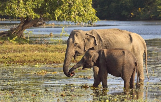 Day 9: Yala National Park