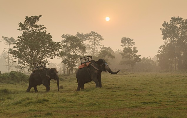 Day 7: Chitwan National Park