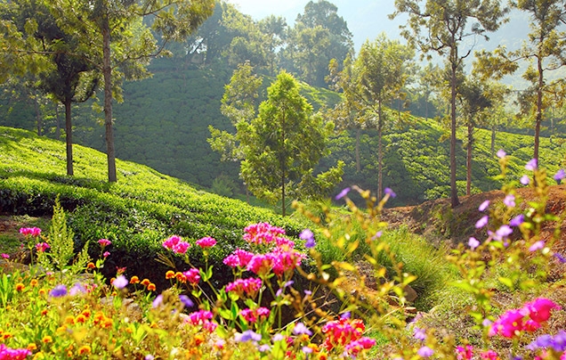 DAY 6: COONOOR HILL STATION