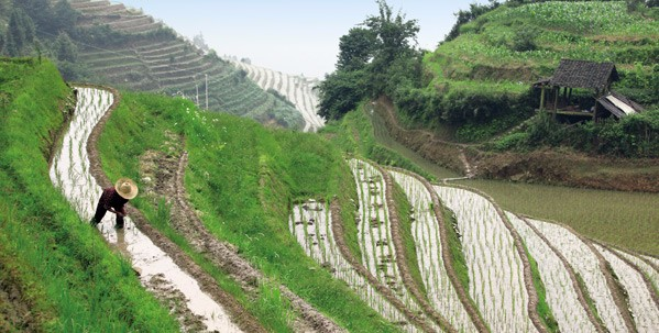 Walk the Longji Rice Terraces